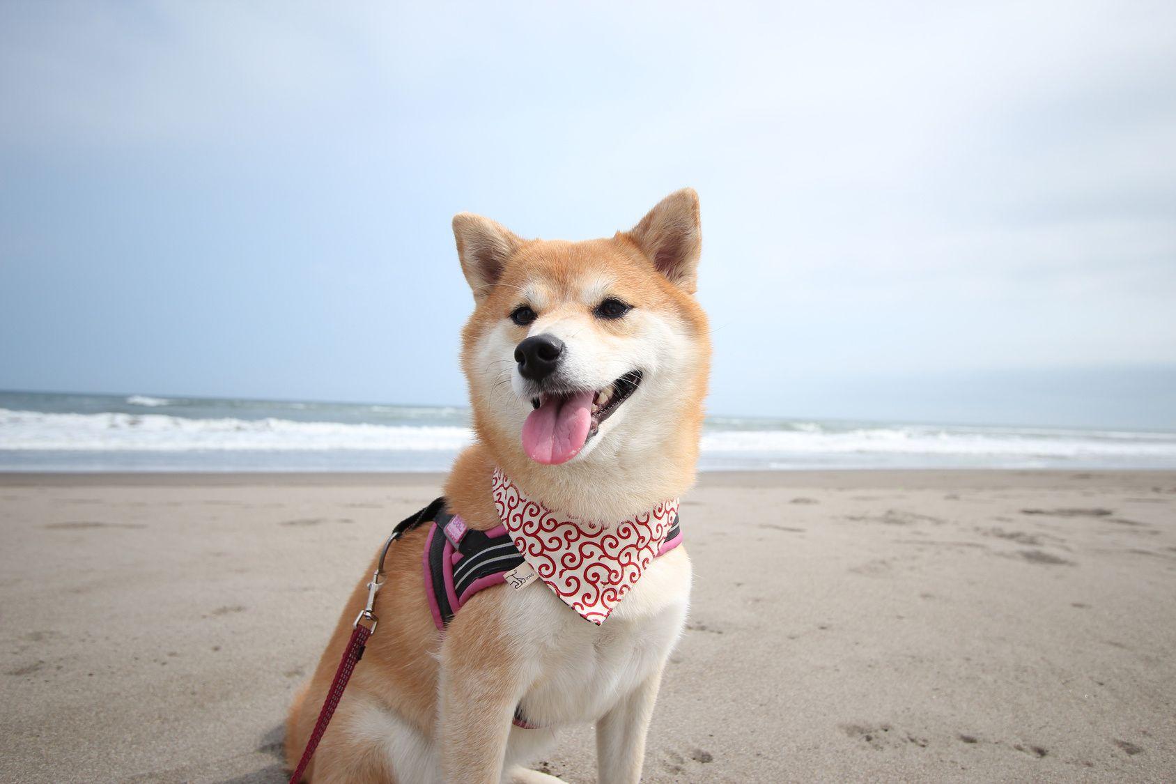 夏だ!愛犬と一緒に海に行こう!九州のペット連れOKなビーチ5選