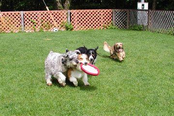 群馬県で探す看板犬のいるお宿を紹介!