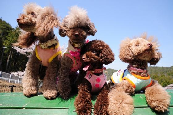 夏休みは愛犬と一緒に楽しもう♪近畿の観光スポット10選