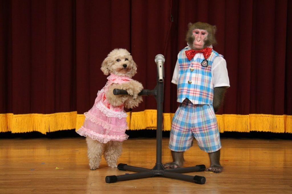 愛犬と一緒に夏休みを満喫しよう~♪九州でおすすめのお出かけスポット特集