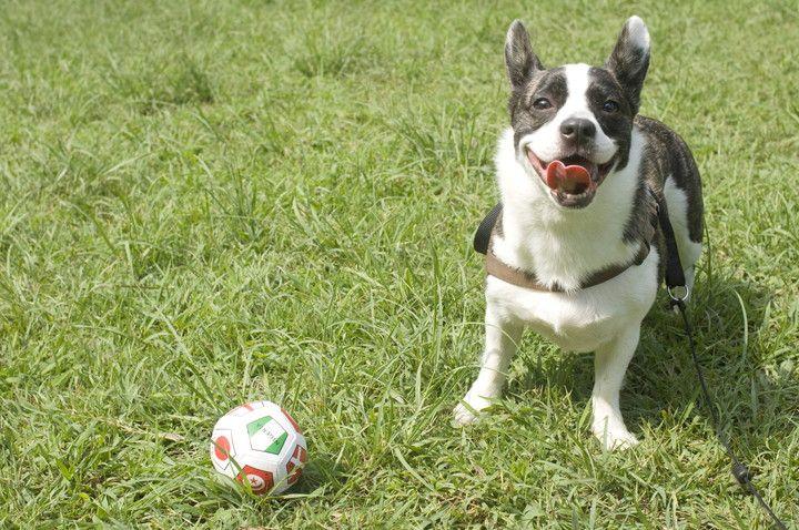 愛犬と一緒に楽しめる!東海エリアのおすすめ公園4選