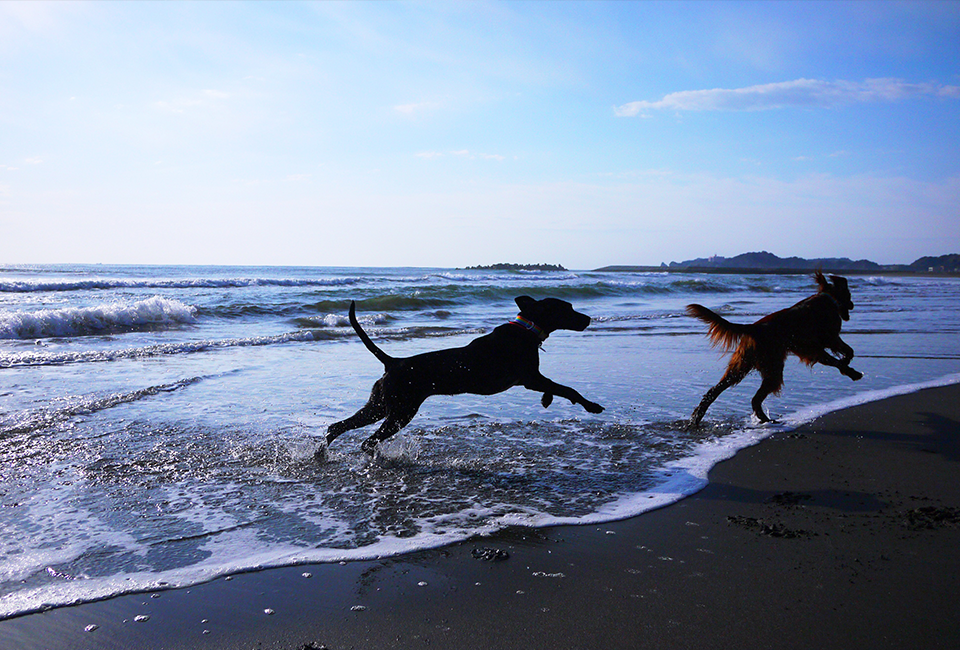 愛犬と一緒に楽しむ夏休み!千葉県の観光スポット10選