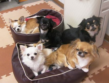成田空港近くで人気のペットホテル!安心して飼い主さんは海外旅行へ