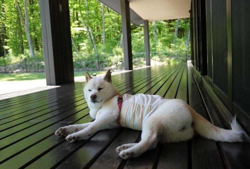 夏休み!愛犬と那須高原を巡る旅♪押さえておきたいペンションはこの7軒