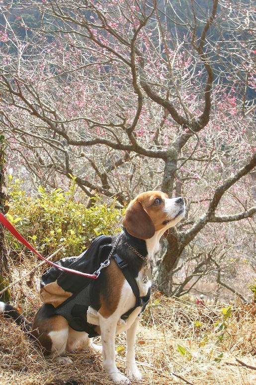 初めての登山を愛犬と楽しもう♪<神奈川県箱根・湯河原>