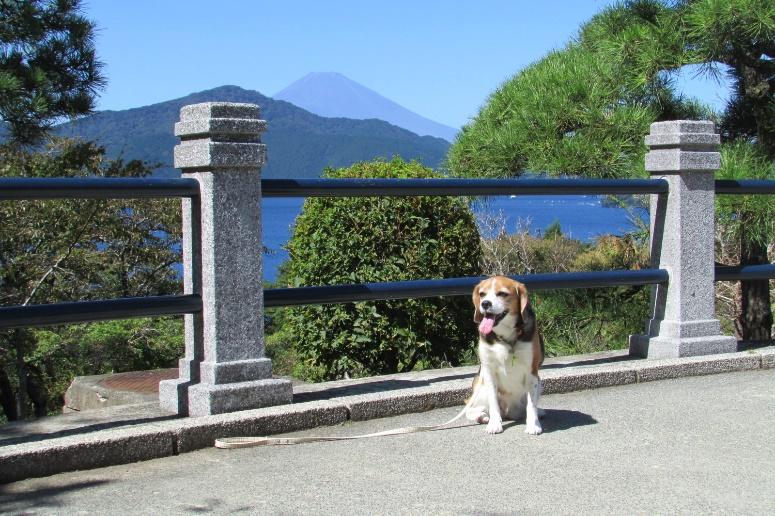 芦ノ湖周辺で愛犬と一緒に歴史探訪<神奈川県箱根町>