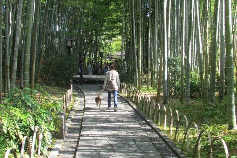 涼しくなってきたら愛犬と伊豆旅行へ行こう<静岡県・伊豆>