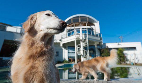 愛犬と一緒にお泊まりしよう!伊豆・箱根の犬と泊まれる宿9選