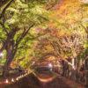 愛犬と秋の富士山ドライブPart3〈河口湖 2017紅葉まつり もみじ回廊のライトアップ〉
