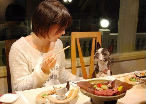 食事も寝るのも一緒!愛犬とずっと一緒に過ごせる宿<房総>