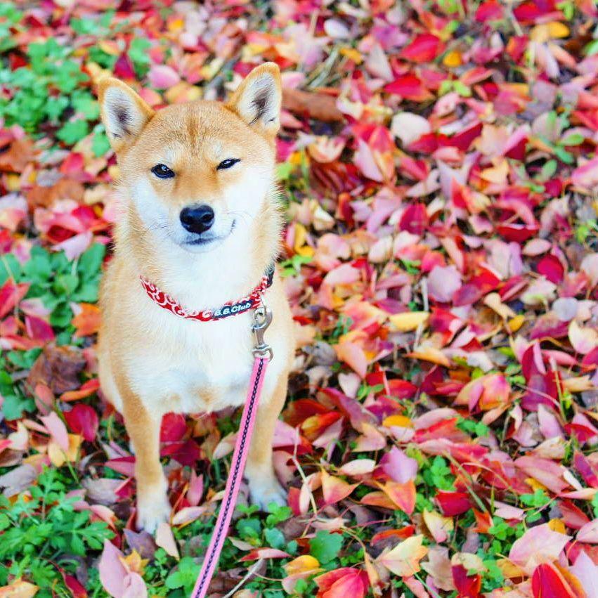 紅葉シーズン到来!ワンちゃんと泊まれる関東紅葉スポット宿10選