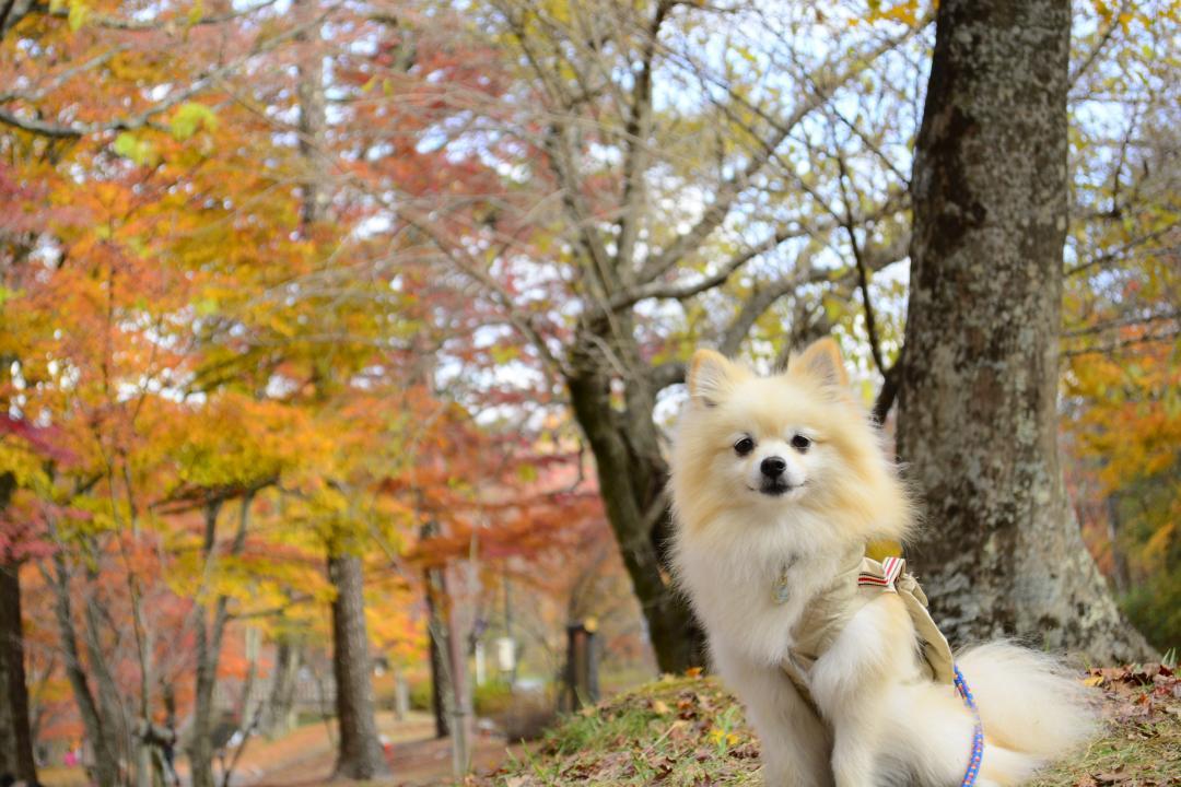 いつでも一緒!愛犬と一緒に楽しめる九州の紅葉狩りスポット