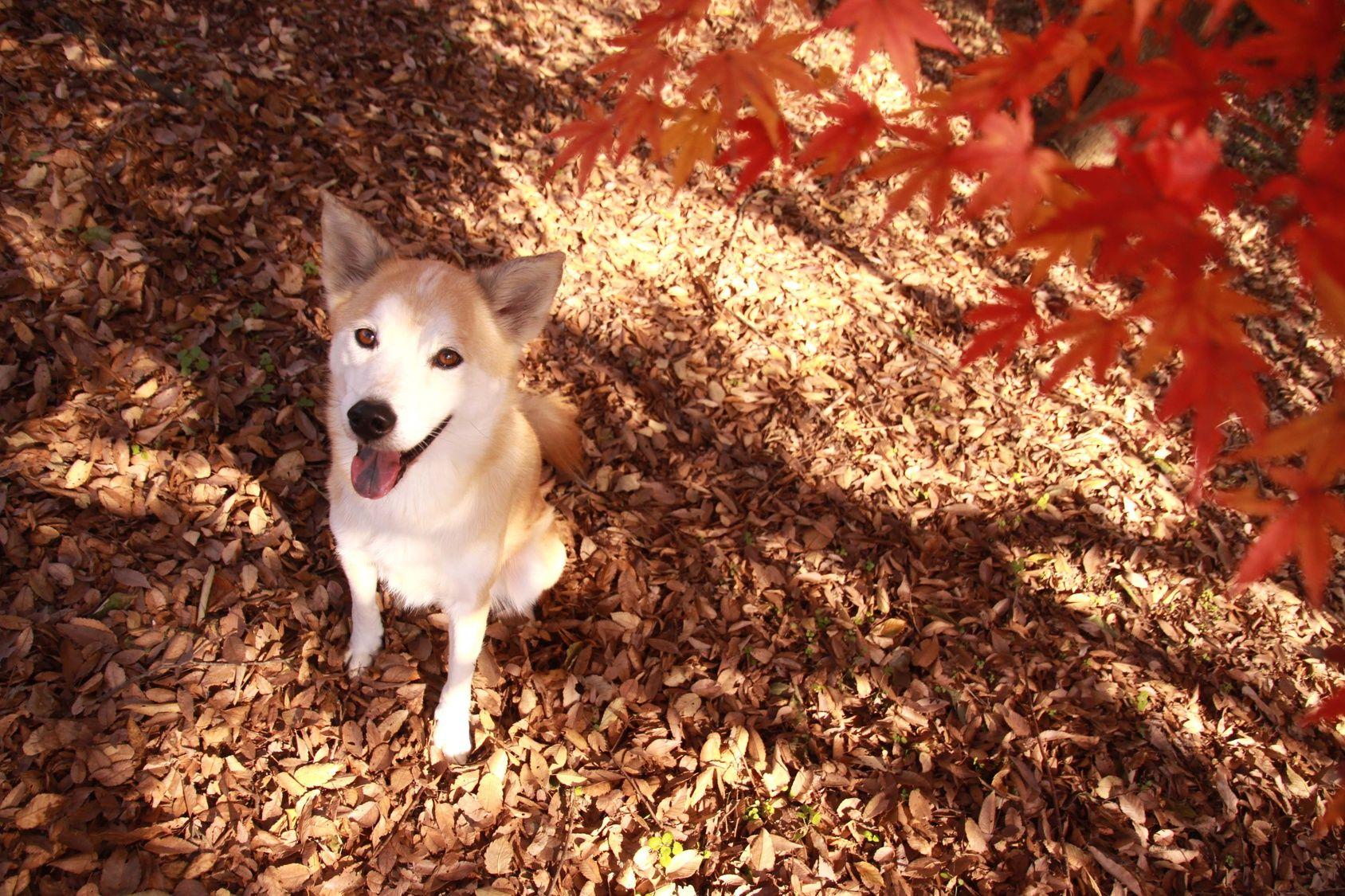 愛犬と美しい紅葉の写真を残そう!ワンちゃんOKの都内紅葉ベストスポット10選
