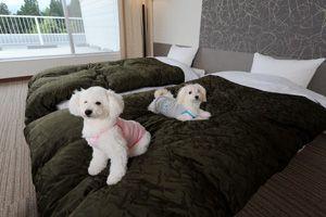 愛犬にも旅行の思い出を!ペットといっしょに寝られる宿<甲信越>