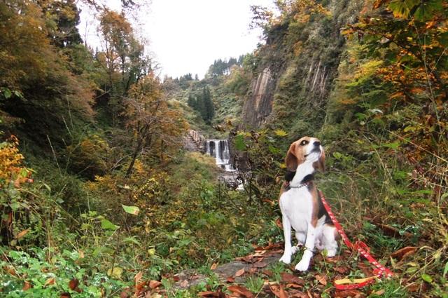 愛犬と一緒に紅葉も楽しめる新潟のおすすめ観光名所4選♪<十日町・魚沼>