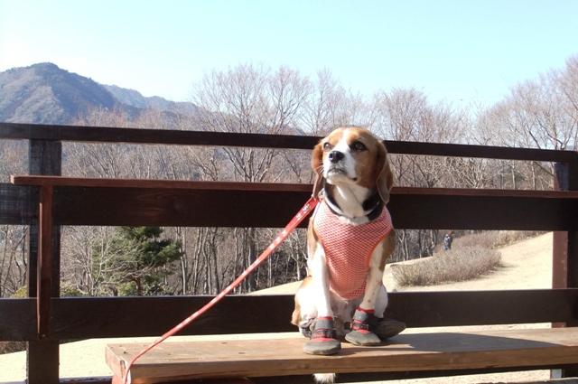 愛犬とお散歩~♪神奈川県中央地区おすすめの公園Part2<神奈川>