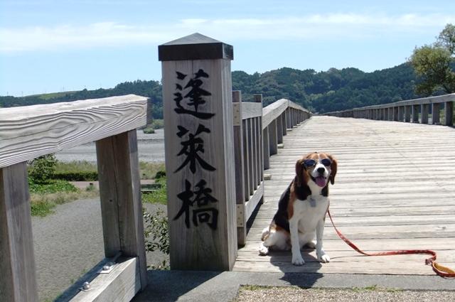 ギネスにも登録された世界一長い木造歩道橋「蓬莱橋」を訪れてみました!<静岡県島田市>