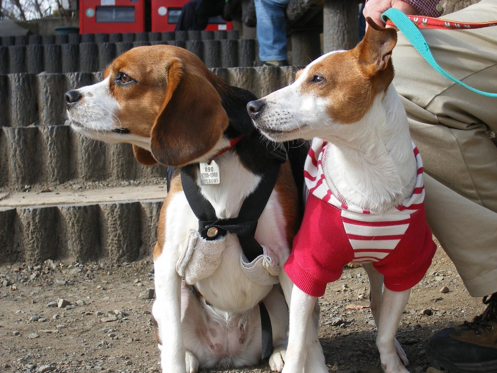 愛犬と一緒に紅葉も楽しめる高尾山の山登り♪<東京都>