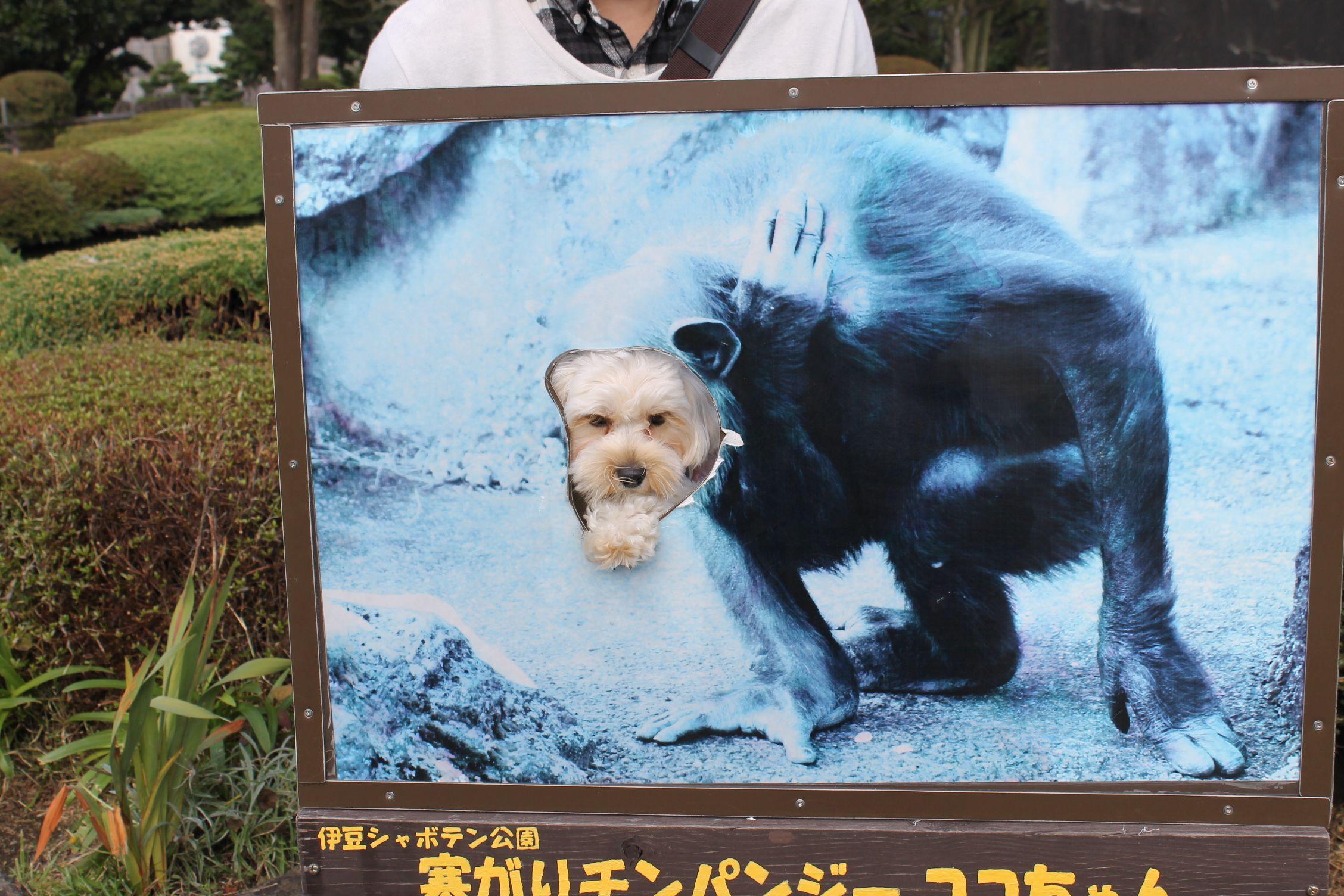 愛犬と電車で行ける「伊豆高原」一泊二日旅行プラン