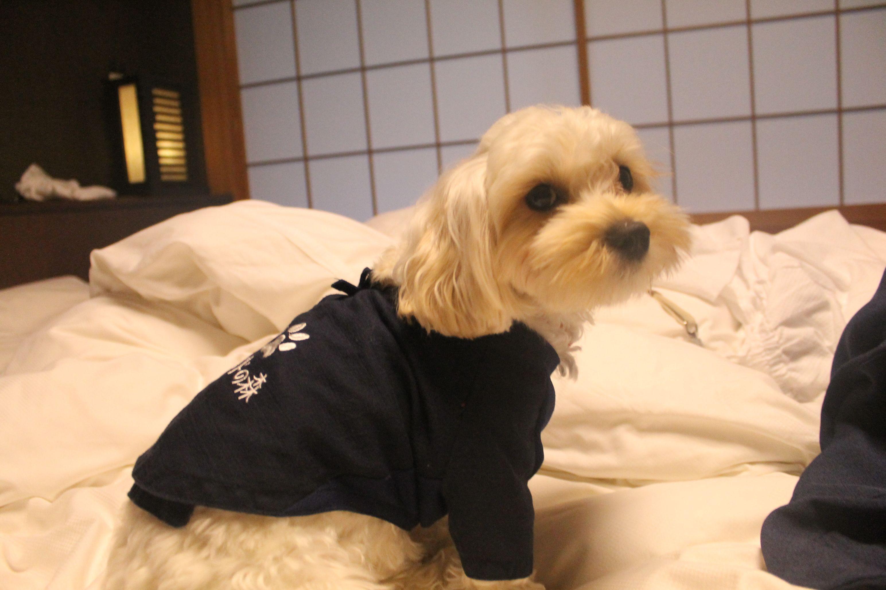 伊豆高原で愛犬と一緒にバリ気分~♪「ウブドの森」<静岡県伊東市>