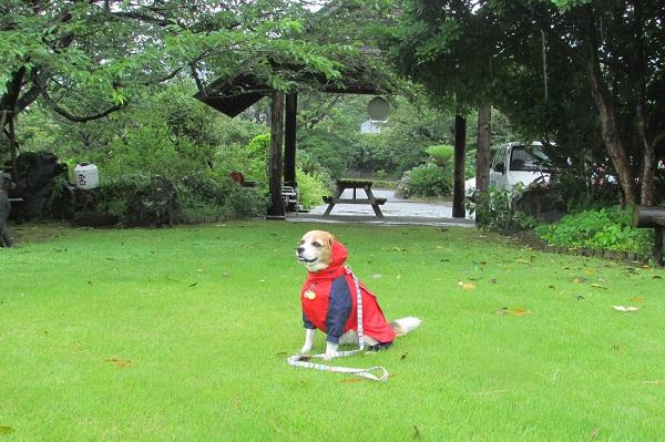 愛犬残念!雨の日の伊豆大島&熱海旅行