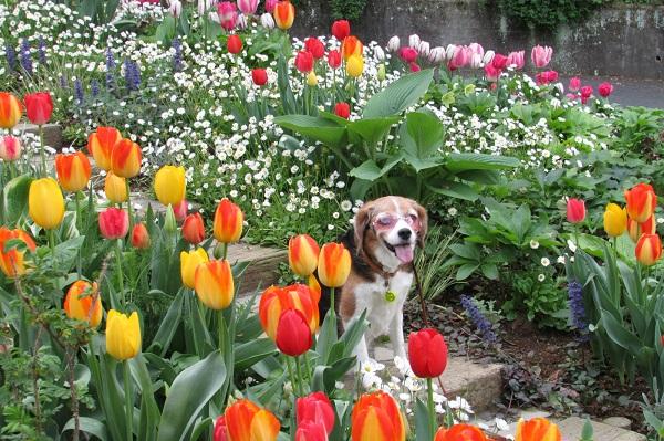 愛犬とのお散歩にオススメ!アカオ ハーブ&ローズガーデン<静岡県熱海市>