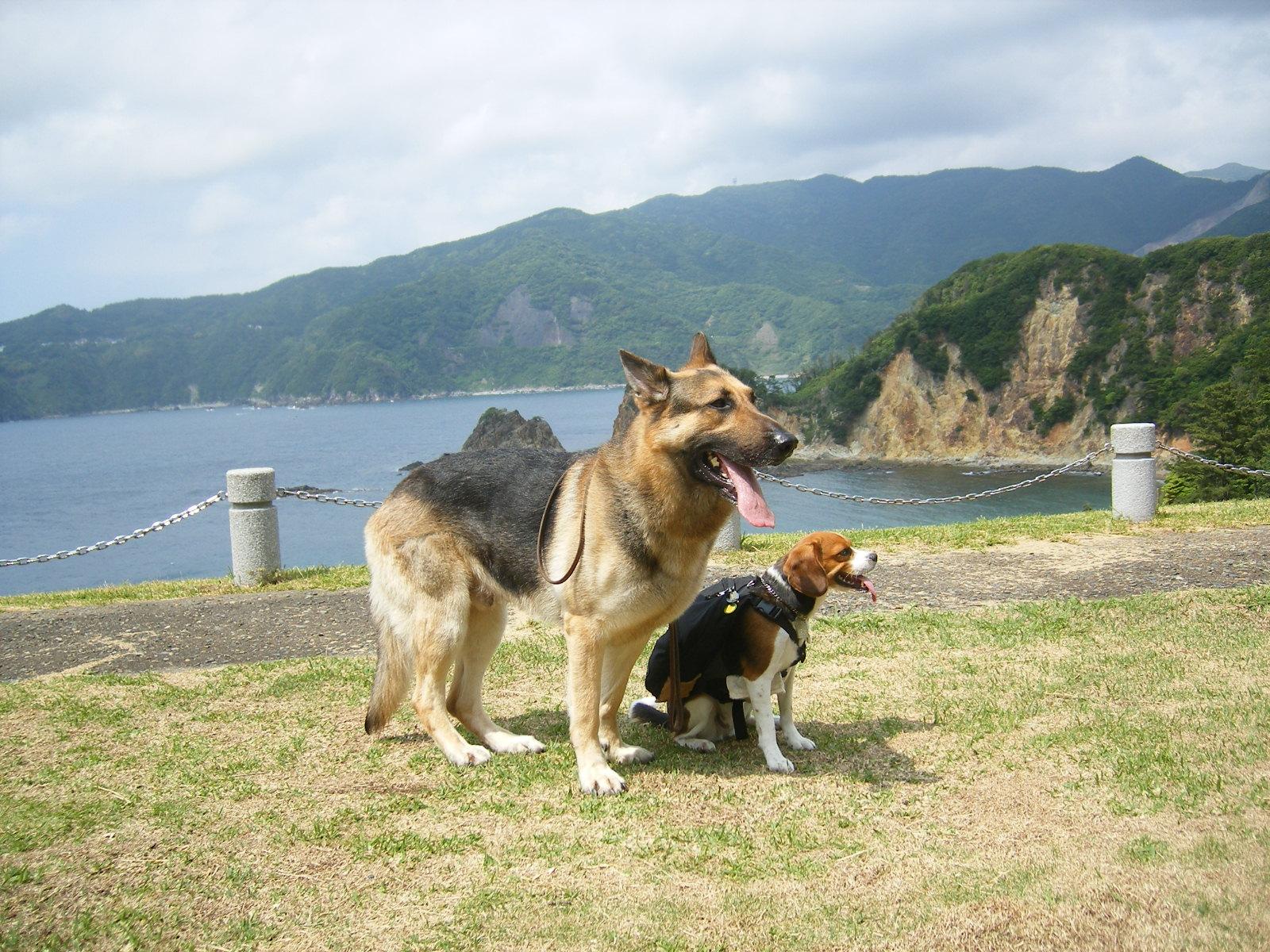 愛犬と一緒に「富士見の丘」~「恋人岬」冒険散策~♪<静岡県・西伊豆>
