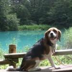 愛犬と行く磐梯山周辺観光 ― 復興応援 福島旅行②