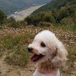 愛犬と一緒に紅葉狩りハイキング!兵庫県姫路市「書寫山ロープウェイ&圓教寺」