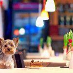 愛犬と一緒にあったかい場所でスイーツが食べられるお店5選<兵庫県 篠山・宝塚・川西編>