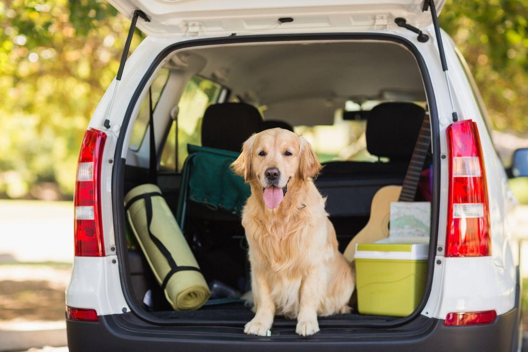 これがあればもっと快適!愛犬とのドライブにおすすめのカーグッズ・アクセサリー4選