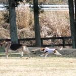 自由にたくさんの友達と遊ぶ!ちょっと変わった愛犬家オフ会をField Dogs Gardenで開催しました♪