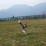 朝霧高原にあるField Dogs Gardenで大きいわんちゃんと交流-山中湖旅行