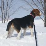 草津国際スキー場で愛犬と雪遊び♪ー冬の草津旅行②