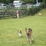 たくさんのわんちゃんが集まる自然豊かなドッグラン Field Dogs Garden