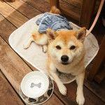 愛犬と一緒にあったかい場所でスイーツが食べられるお店5選<兵庫県 伊丹・尼崎編>