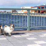 千葉の海辺のショッピングセンター「ハーバーシティ蘇我」で愛犬とお散歩しよう!
