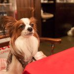 愛犬と一緒にあったかい場所でスイーツが食べられるお店5選<大阪府 松原・東大阪・大東・四条畷編>
