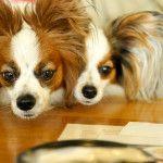 愛犬と一緒にあったかい場所でスイーツが食べられるお店5選<兵庫県 洲本市・明石市・加古川市・丹波市編>