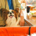 愛犬と一緒にあったかい場所でスイーツが食べられるお店8選<大阪府 和泉・泉佐野・岸和田・堺編>