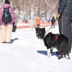 前橋ホワイトフェスティバル2017 -愛犬と犬ゾリレースと雪上ルアーコーシングにチャレンジしてきました!-