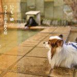 いつでもペットと一緒!ペットと泊れる温泉宿「だいこく館」宿泊レポ!@水上温泉