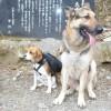 愛犬と一緒になだらか長距離山行!中伊豆天城峠から三蓋山