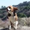 初春の熱海を愛犬と一緒に満喫!熱海梅園梅まつり&姫の沢公園の散策