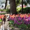 春のお散歩におすすめ !チューリップが咲き誇る「横浜公園」と100年の歴史を感じる「横浜赤レンガ倉庫」