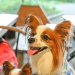 山梨県や長野県の大自然で桜を楽しむ!愛犬と一緒に入れるお花見カフェ5選!