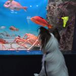 イルカや泳ぐ魚に会わせたい!関東周辺で愛犬と一緒に入れる水族館5選!