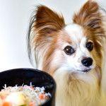 湘南絶品グルメ「本マグロ」と「湘南しらす」!神奈川県で愛犬と海鮮料理が食べられるお店7選!