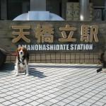 日本三景のひとつ「天橋立」を愛犬と散策 ゴールデンウィーク4泊5日 関西旅行を満喫 Part3