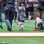 [東海版] 5月に愛犬と参加できるイベントやフェス特集2017!